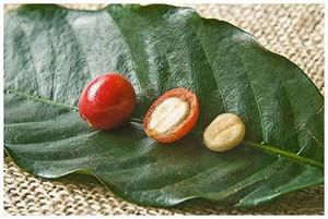 Coffeebean01